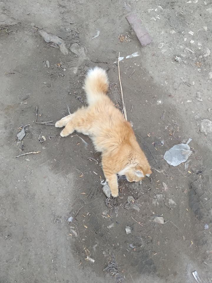 Cruzime de care numai OMUL e capabil: Pe o stradă din Capitală au fost găsite mai multe pisici OTRĂVITE (FOTO cu impact puternic emoţional)