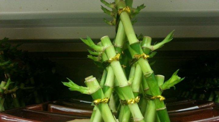 SIGUR NU ȘTIAI ASTA! Aceste plante atrag banii şi norocul în casă