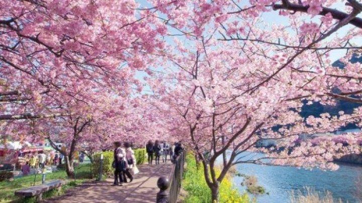 Luna lui Mărţişor. Cum sărbătoresc oamenii primăvara în diverse colțuri ale lumii