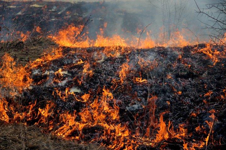 Moldova, cuprinsă de FLĂCĂRI! Peste 1.102 hectare de vegetaţie au ars timp de 24 de ore