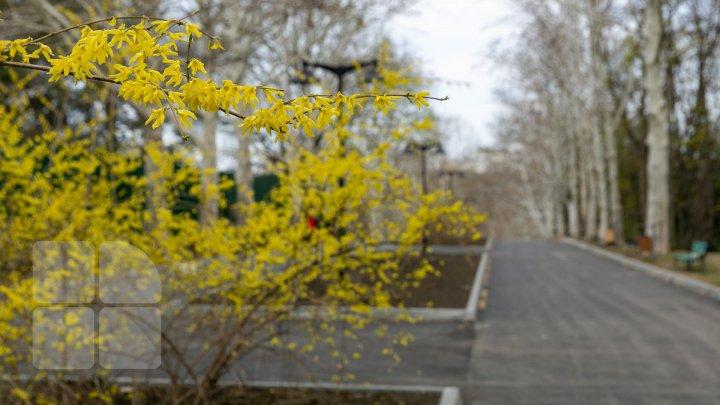 Parcul Valea Trandafirilor PRINDE CULOARE. Vezi cum arată acum (FOTOREPORT)