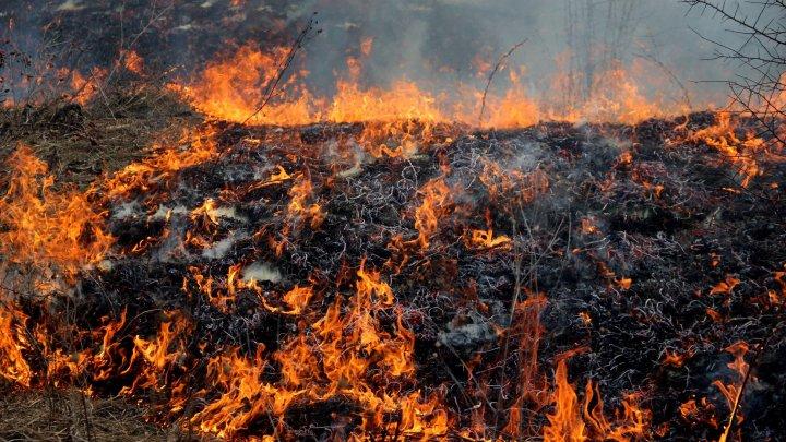 FOC în Moldova. Pompierii au intervenit pe întreg teritoriul ţării pentru a lupta cu incendiile de vegetaţie (VIDEO)