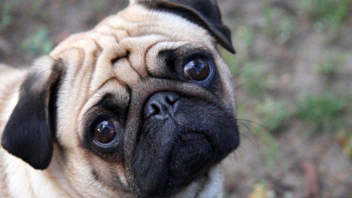 I-au confiscat câinele pentru că NU A PLĂTIT taxe. Administraţia unui oraş german, CRITICATĂ de locuitori