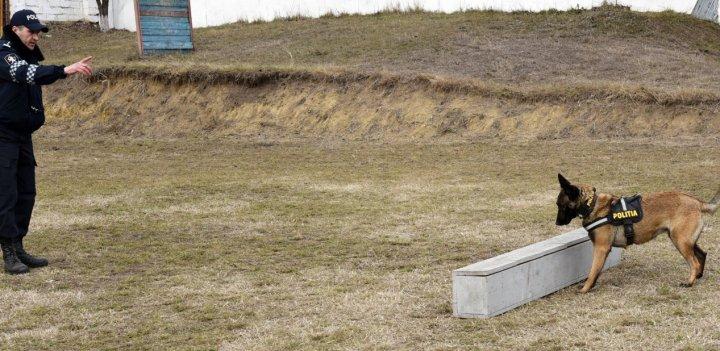 AVENTURĂ NEOBIŞNUITĂ pentru zeci de copii de la o grădiniţă din Capitală. Au văzut ce știe să facă un câine poliţist (FOTO)