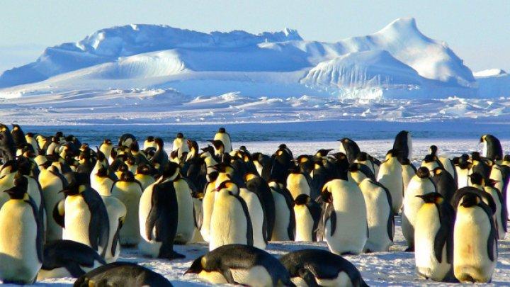 DEZASTRU ECOLOGIC în Antarctica! O furtună fără precedent a distrus tot în calea ei