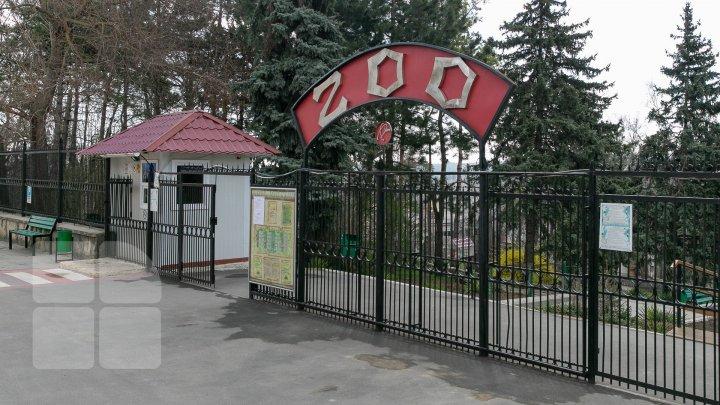 Directorul Grădinii Zoologice riscă să fie demis. Alexei Hanțațuc a acordat mai multe premii și concedii soției sale (DOC)