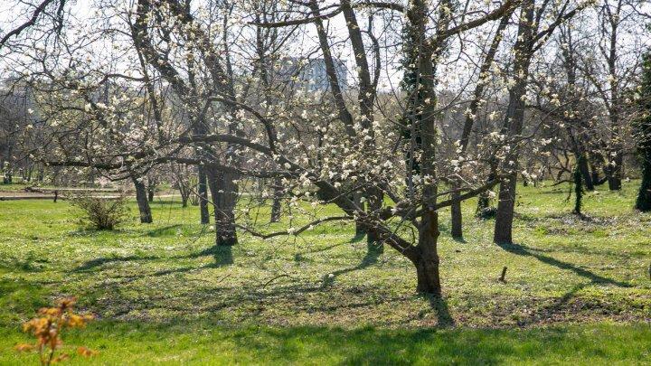 ANOMALIILE LUNII MARTIE. Ce spun meteorologii despre temperaturile de la începutul primăverii