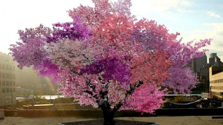 Un copac din New York crește 40 de fructe diferite. Un arbore costă 30.000 de dolari (VIDEO)