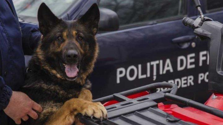 Misiune îndeplinită! Un câine-poliţist a descoperit un hoţ recidivist la Glodeni