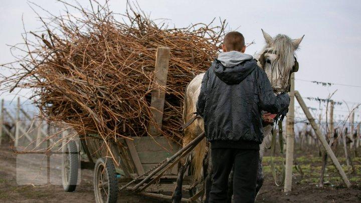 Un tânăr BEAT CRIŢĂ, din satul Logăneşti, Hânceşti, A FĂCUT PRĂPĂD după ce a urcat într-o căruţă