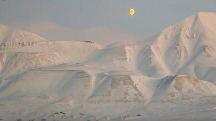 Grădina de la Polul Nord. Într-un loc cu mai mulţi urşi polari decât oameni, un cercetător cultivă legume