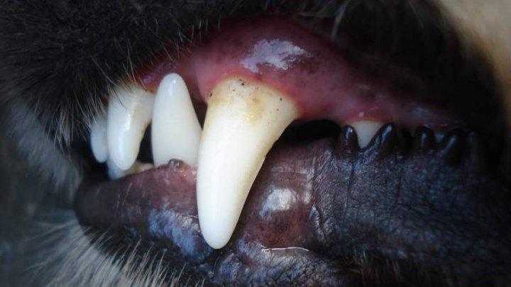I-a smuls braţul DIN COT! O femeie a fost atacată cu bestialitate de PROPRIUL câine în grădina casei (FOTO)