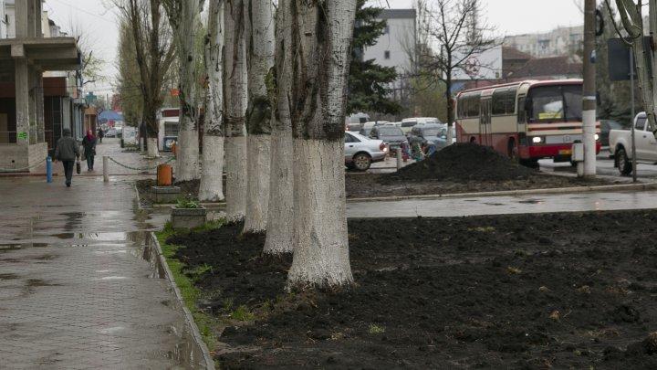 Un bărbat din Căuşeni creează adevărate opere de artă din rădăcini de copac (FOTOREPORT)