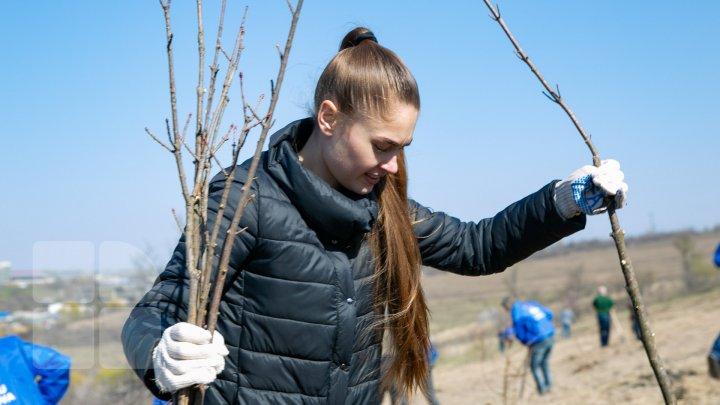 Sâmbăta se plantează copaci. PDM participă la înverzirea plaiului (FOTOREPORT)