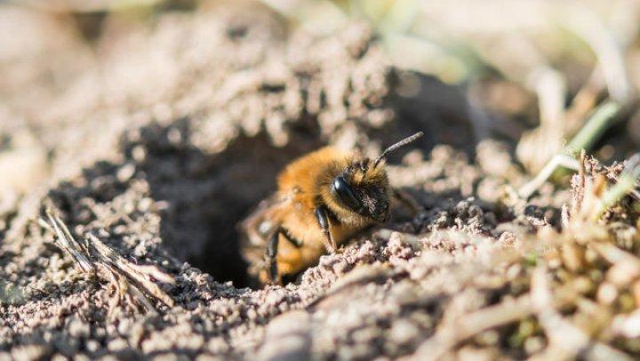 AVERTISMENT: Populația de insecte din întreaga lume se apropie de un sfârșit inevitabil