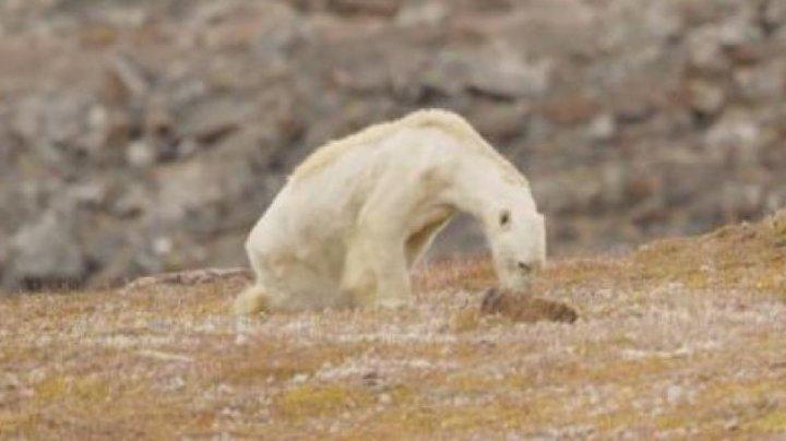 ONU anunţă DEZASTRU ECOLOGIC: Peste 1 milion de specii de plante și animale riscă să dispară