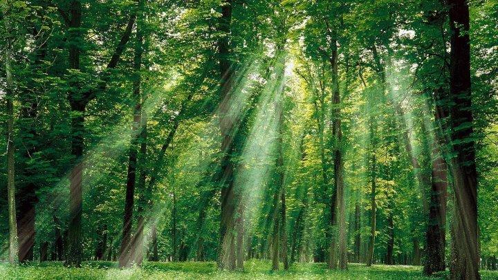 Studiu: Plantele din pădurile tropicale dense sunt capabile să-şi camufleze mirosurile pentru a evita să fie detectate şi mâncate