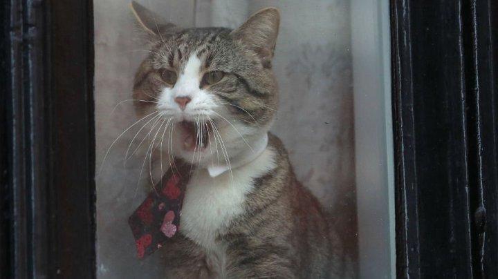 Ce se va întâmpla cu pisica fondatorului Wikileaks, după arestarea acestuia
