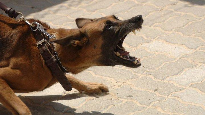 PEDEAPSĂ ÎNGROZITOARE ÎN MEXIC. Un presupus violator a fost castrat de un câine