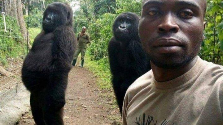 Selfie devenit viral. Două gorile pozează ca oamenii, alături de paznicii unei rezervații din Congo