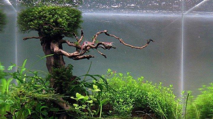 O echipă de cercetători chinezi au descoperit mai multe grădini subacvatice în Groapa Marianelor