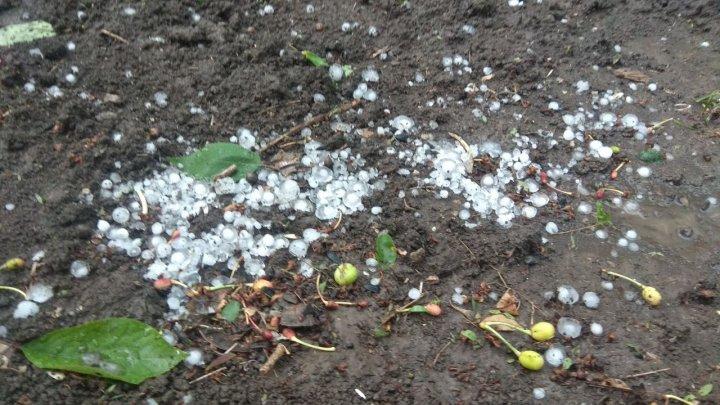 Grindină cât BOBUL DE MAZĂRE în nordul ţării. A avut de suferit ROADA pomilor fructiferi (FOTO, VIDEO)