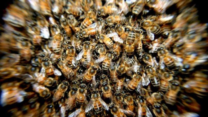 Tragedie. Un bărbat a murit, după ce a fost înțepat de un roi de albine