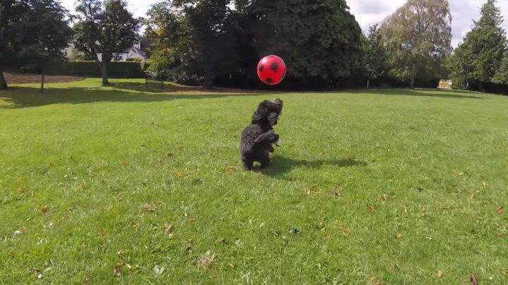VIRAL PE INTERNET! Un câine a devenit vedetă după ce a oferit lecţii de dribling unor copii irlandezi