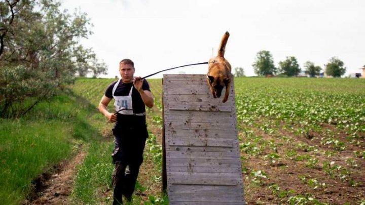 Cei mai buni și pregătiți câini s-au întrecut la concursul BIATLON 2019. Cine este câștigătorul