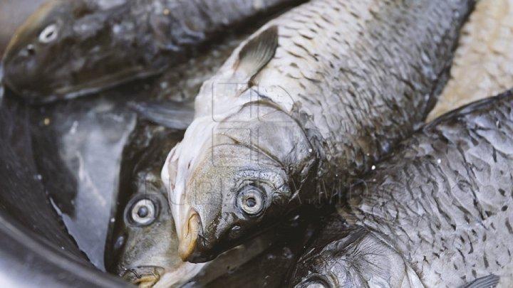 ATENŢIE! Peşte periculos pentru consum a fost vândut în magazine