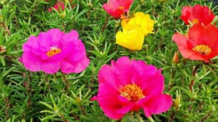 Le calci în picioare, dar îţi pot salva viaţa! Planta care vindecă tumorile, hepatita şi ciroza