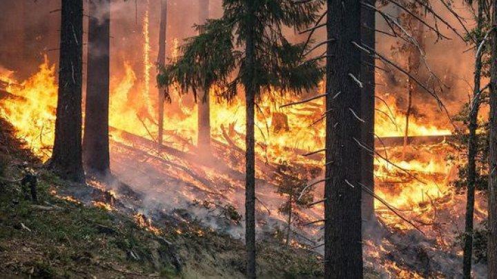 Indonezia: Suprafaţa distrusă în incendiile de pădure din 2019 depăşeşte nivelul din 2018