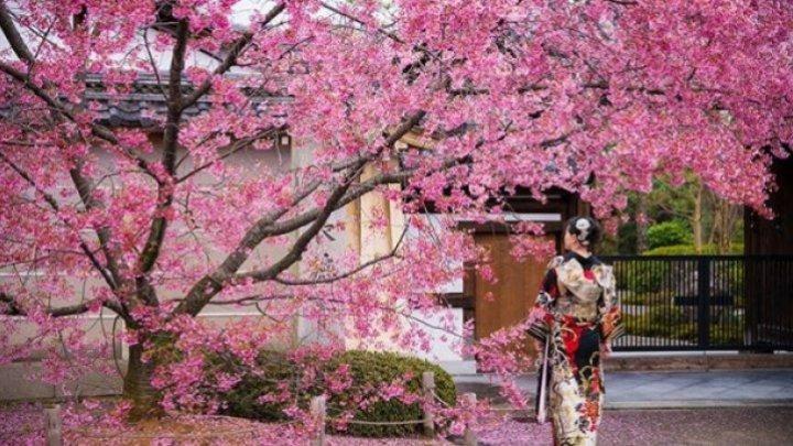 Lucruri pe care le poţi învăţa de la japonezi dacă vrei să ai o viaţă echilibrată