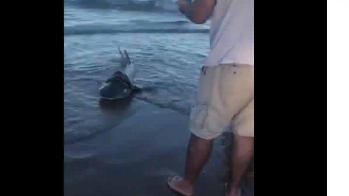 Un rechin sufocat de plastic a fost salvat de un grup de turiști (VIDEO)