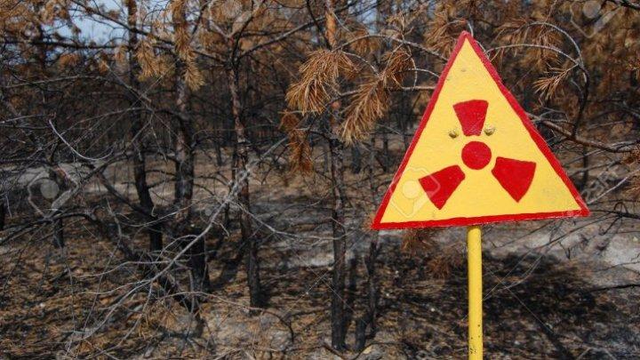 """În premieră, a fost trimisă o dronă în pădurea """"zombie"""" de la Cernobîl. DESCOPERIREA ŞOCANTĂ făcută de cercetători"""