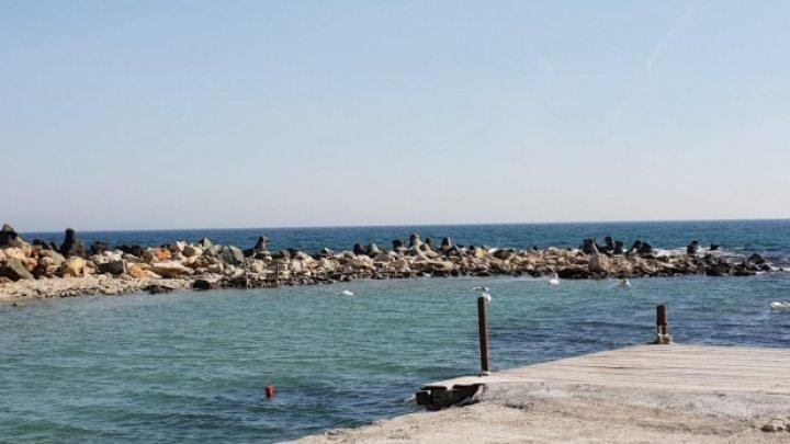 Alertă la Mamaia! Doi delfini au fost găsiți morți pe plajă
