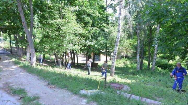 la Grădina Zoologică din capitală va fi amenajată o nouă volieră pentru urșii bruni (FOTO)