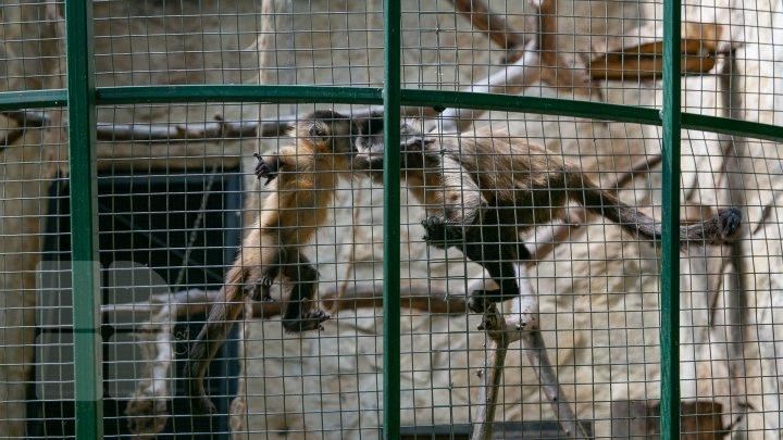 Mănâncă fructe îngheţate şi fac duş. Animalele de la ZOO din Chişinău, afectate de CANICULĂ (FOTO)