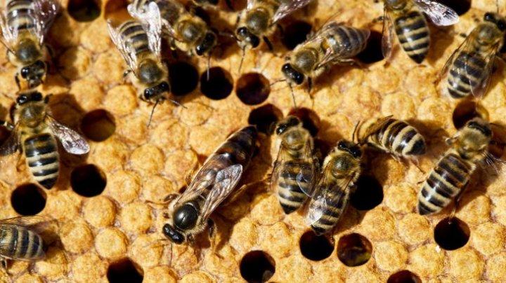 STUDIU: Efectele devastatoare pe care dispariția insectelor le are asupra planetei