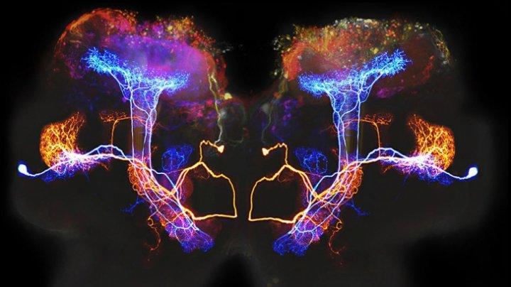 STUDIU: Care e legătura dintre mintea omului și Univers