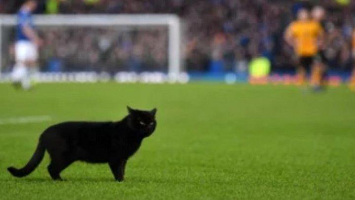OASPETE SURPRIZĂ LA BASEBALL. O pisică a alergat pe teren în timpul unui meci din Coreea de Sud