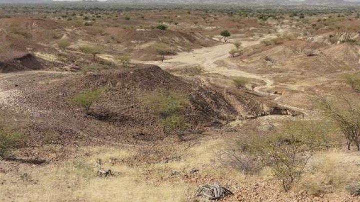 O fosilă cu o vechime de 4,2 milioane de ani a unei maimuţe de dimensiuni mici a fost descoperită în Kenya