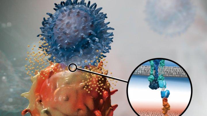 Cercetătorii investighează o nouă terapie pentru vindecarea a cinci tipuri de cancer. În ce constă tratamentul