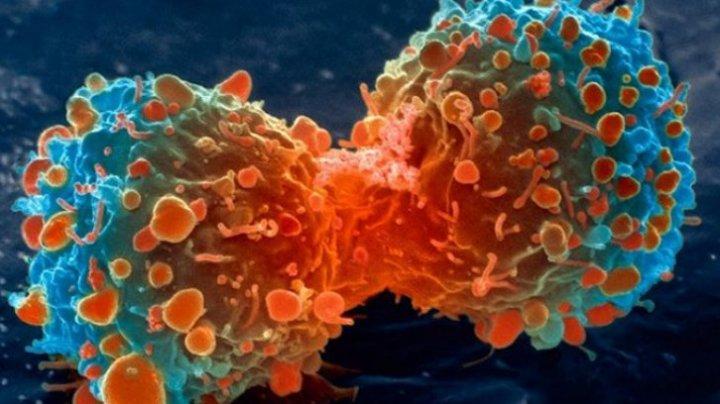 Cum arată fructele care ucid cancerul într-un minut