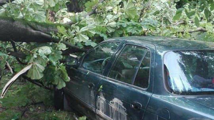 Furtuna a făcut ravagii şi la Glodeni: Maşini strivite, pomi căzuţi, case fără acoperiş şi recolte afectate (FOTO)