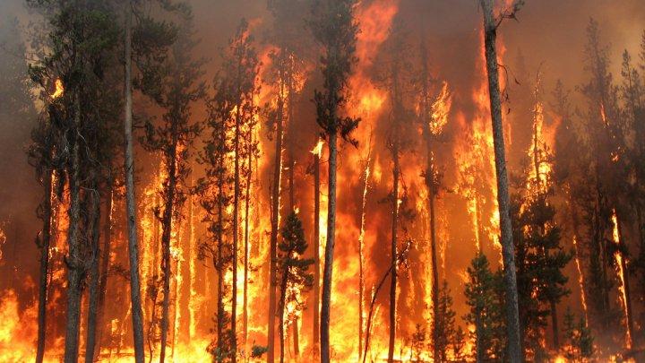 Incendii de vegetaţie pe o insulă din Grecia: Sute de pompieri au luptat cu flăcările uraşe