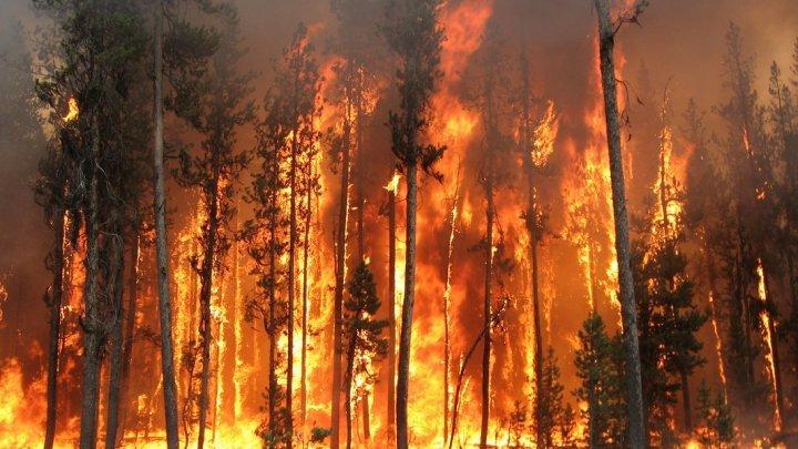 Incendiu de pădure în zona de excludere din jurul centralei de la Cernobâl