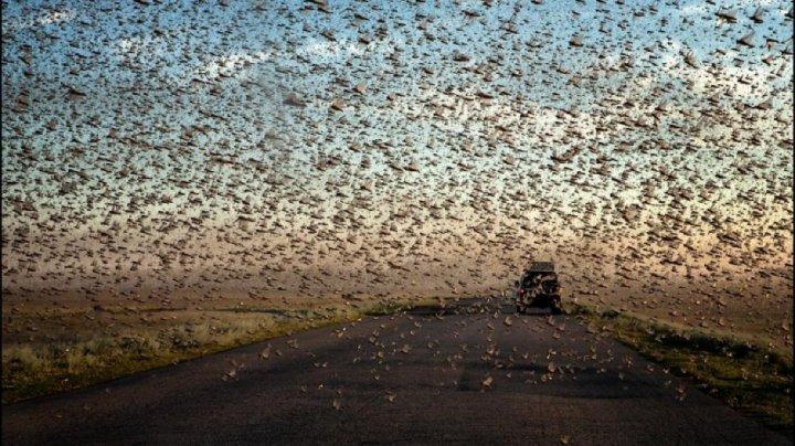 Capitala mondială a cazinourilor, Las Vegas, a fost invadat de lăcuste