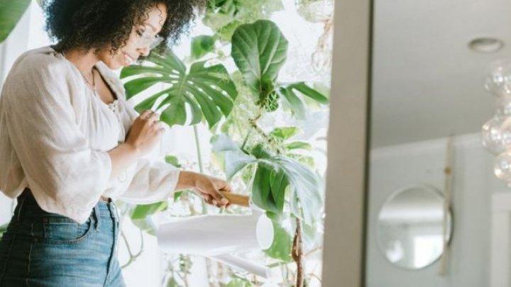 Bine de ştiut! Zece plante care purifică cel mai bine aerul din locuinţă