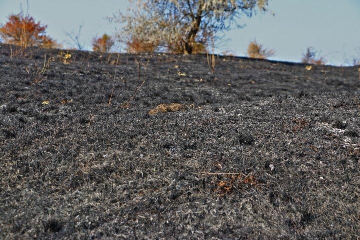 Incendiu la Rezervația Orheiul-Vechi. Focul a mistuit aproximativ 40 de hectare (FOTO)